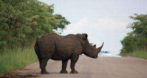 Budget camping safaris, wildlife safari Tanzania