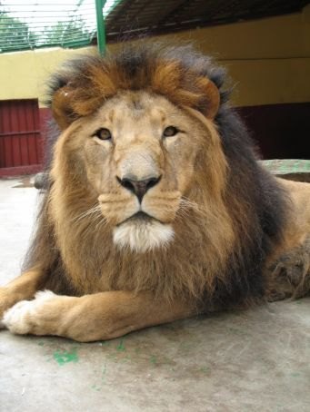 Addis Ababa to build new zoo