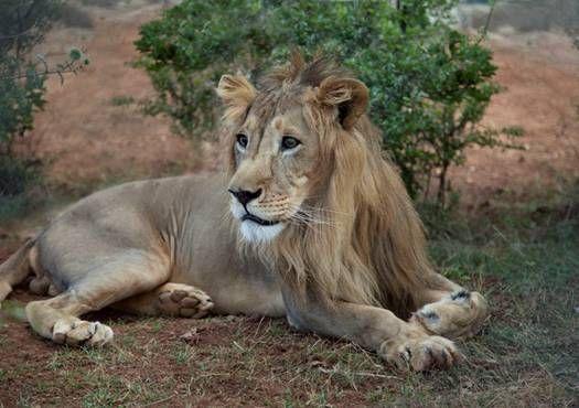 Conservation plan for Ethiopia's wild animals