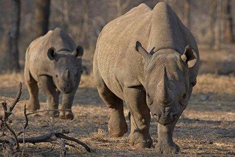 Tanzania suspends Serengeti officials after rhino killings