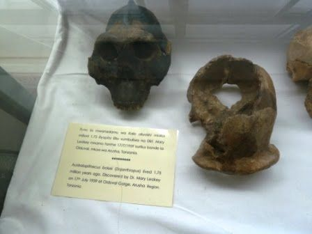 Kenya returns fossils to Tanzania