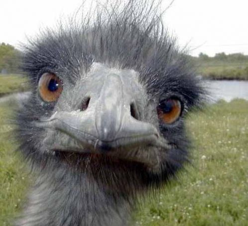 Ostrich ban affects South African farms
