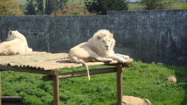 Cape Town zoo closes