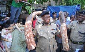 Major ivory seizure in Dar es Salaam