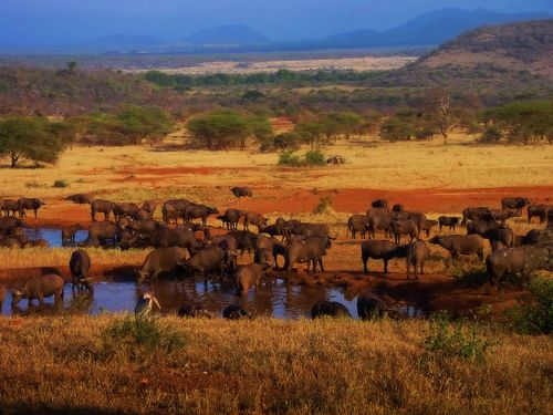 Tanzania national parks increase fees
