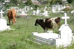 Accra cemeteries full