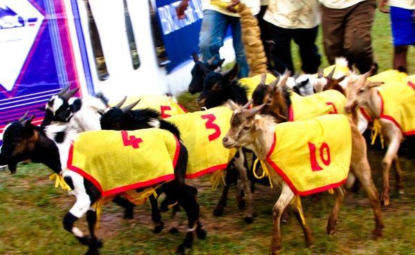 Dar es Salaam Charity Goat Races