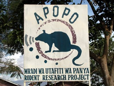 Rats speed de-mining in Mozambique