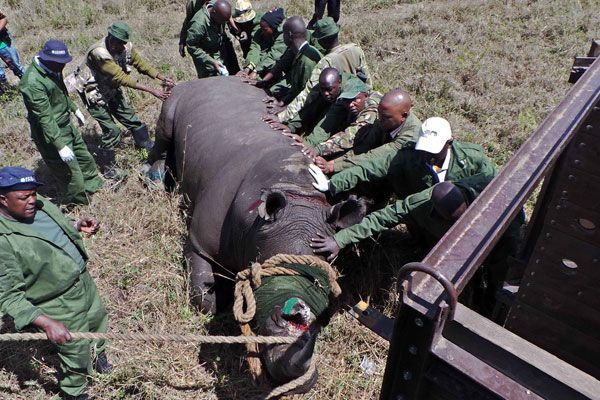 Investigation into rhino killing in Nairobi