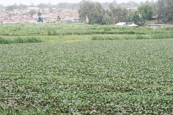 Nairobi dam  to be cleaned