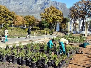Public vegetable garden in Cape Town