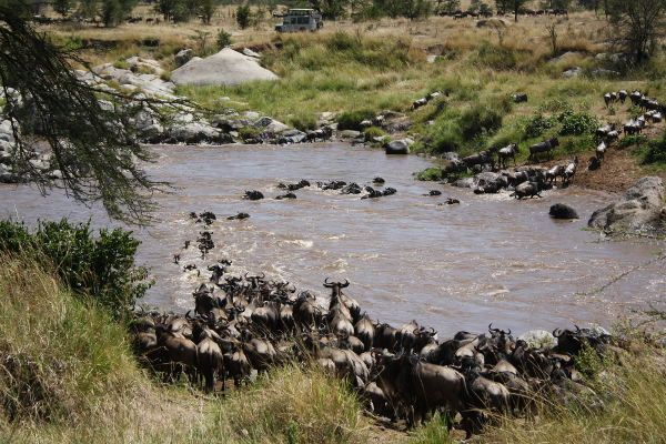 Tanzania to use Lake Victoria waters for Serengeti wildlife