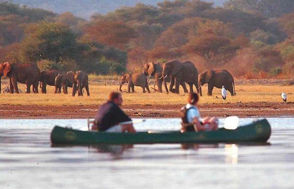 Electronic permits for Arusha's safari tourists