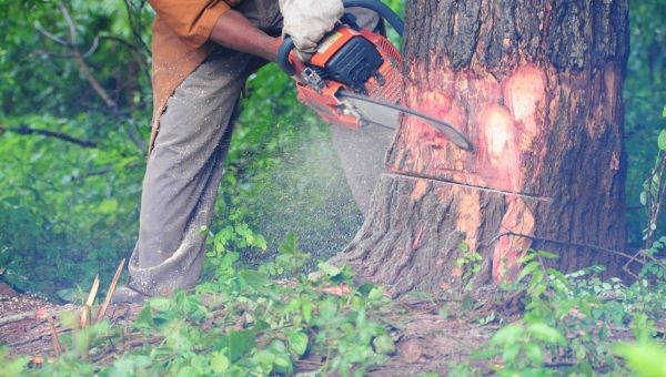 Tanzania and Kenya sign deal to tackle illegal timber trade
