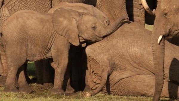 Arusha to open baby elephant orphanage