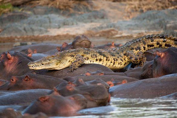 Serengeti voted world's best safari