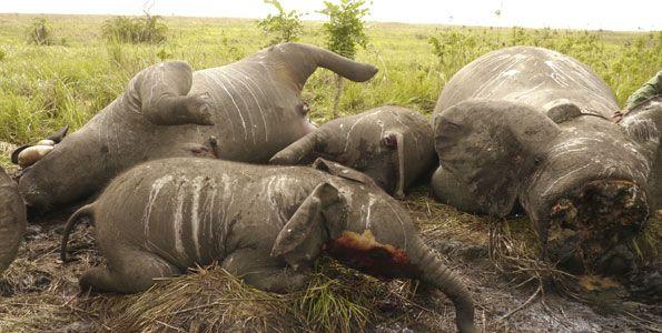 Tanzania jails Chinese poachers for 20 years