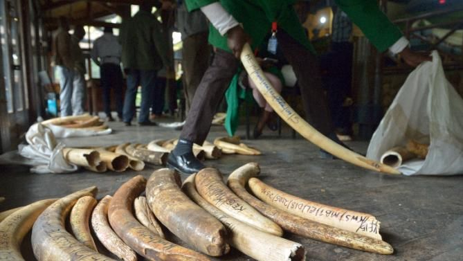 Nairobi police charged with ivory possession