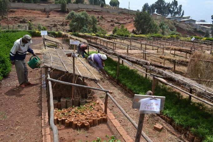 Addis Ababa botanic garden to increase profile
