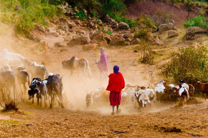 Identity cards for Maasai in northern Tanzania