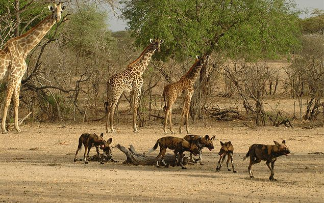 Tanzania plans hydroelectric plant in game reserve