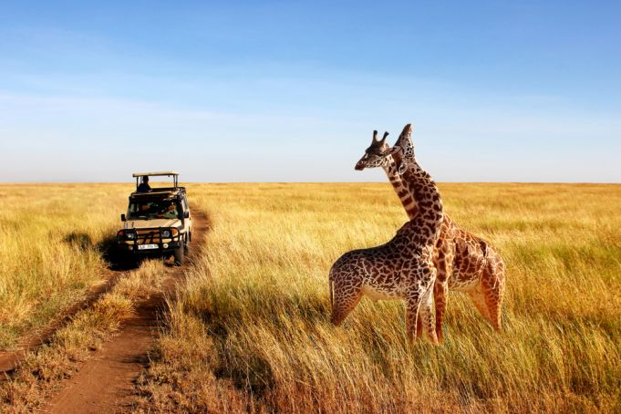 Kenya or Tanzania? The Safari Debate