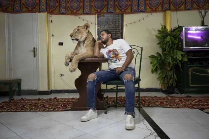 Egyptian lion tamer entertaining viewers from home