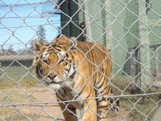 Cape Town zoo closes - image 2