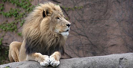 Cape Town zoo closes - image 3