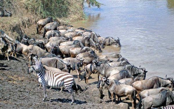 Serengeti road case in court - image 1