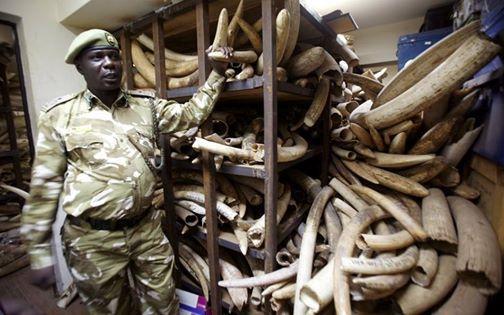 Interpol forms environmental crime team in Nairobi - image 2