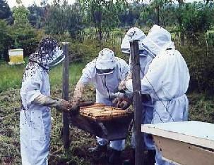 Apimondia symposium on beekeeping in Africa - image 2