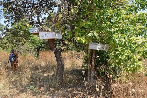 Apimondia symposium on beekeeping in Africa - image 1