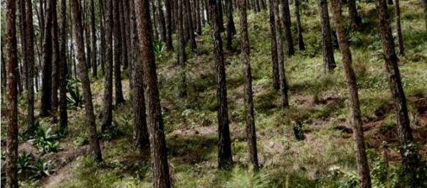 Tanzania and Kenya sign deal to tackle illegal timber trade - image 4