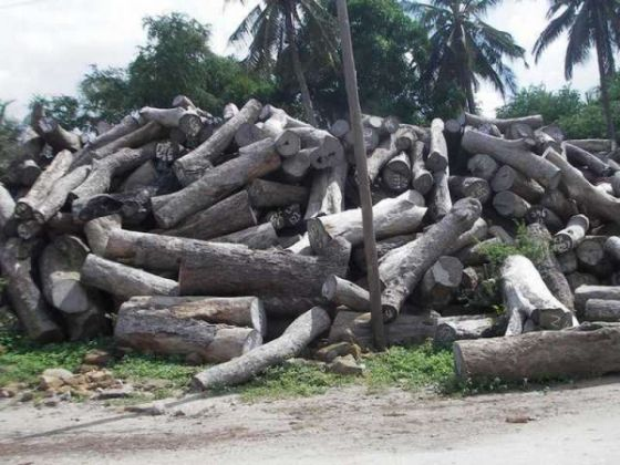 Tanzania and Kenya sign deal to tackle illegal timber trade - image 2