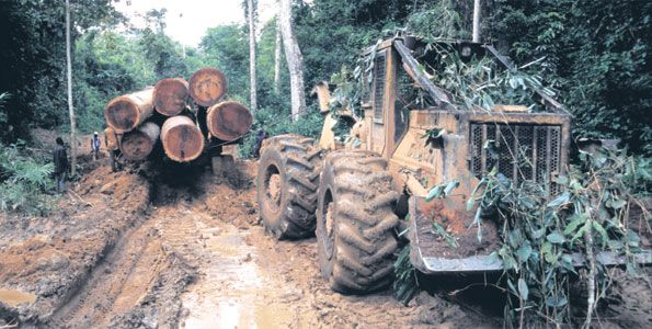 Tanzania and Kenya sign deal to tackle illegal timber trade - image 3