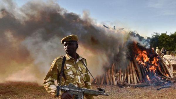 Ethiopia burns ivory to discourage poaching - image 4