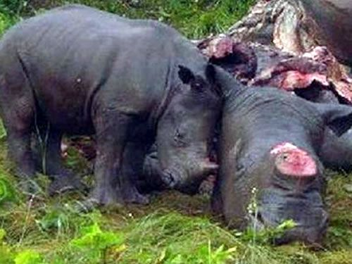 Mozambique police involved in theft of rhino horn - image 2