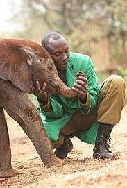 Arusha to open baby elephant orphanage - image 4