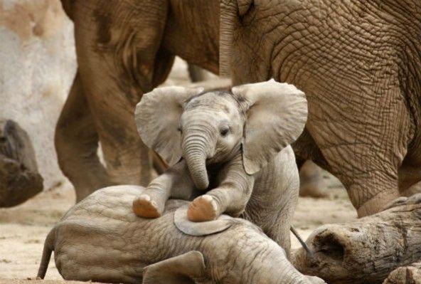 Arusha to open baby elephant orphanage - image 2