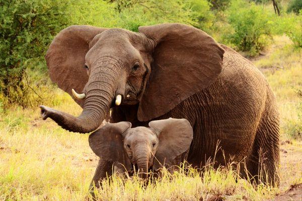 Arusha to open baby elephant orphanage - image 3