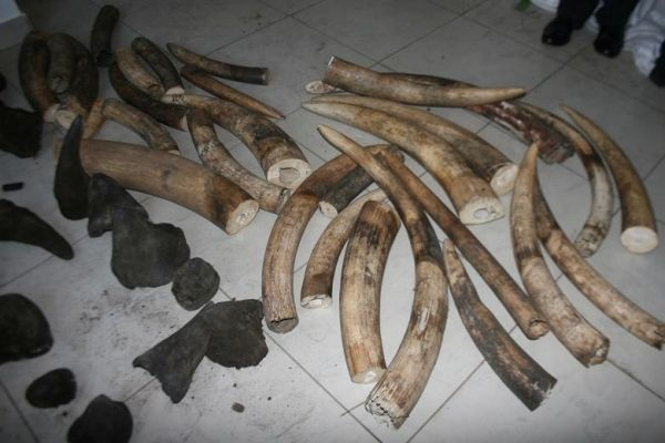 Mozambique police involved in theft of rhino horn - image 3