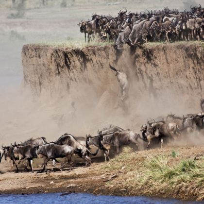 Serengeti voted world's best safari - image 3