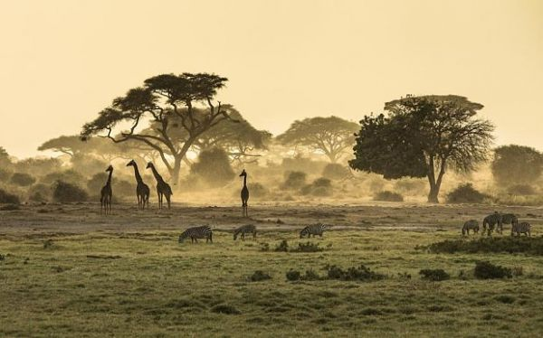 Serengeti voted world's best safari - image 2