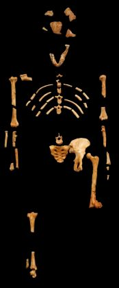 Conference on origins of early hominins in East Africa - image 2