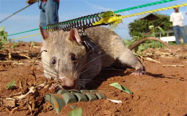 Mozambique declared free of land mines - image 4