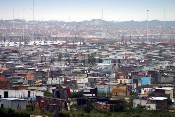 Cape Town tackles rats - image 4
