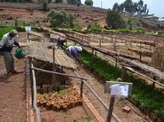 Addis Ababa botanic garden to increase profile