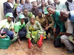 Lagos to plant half a million trees