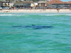 Cape Town uses drones to spot sharks
